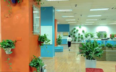 Trồng cây văn phòng là một trong những nghề triển vọng để làm giàu từ nông thôn
