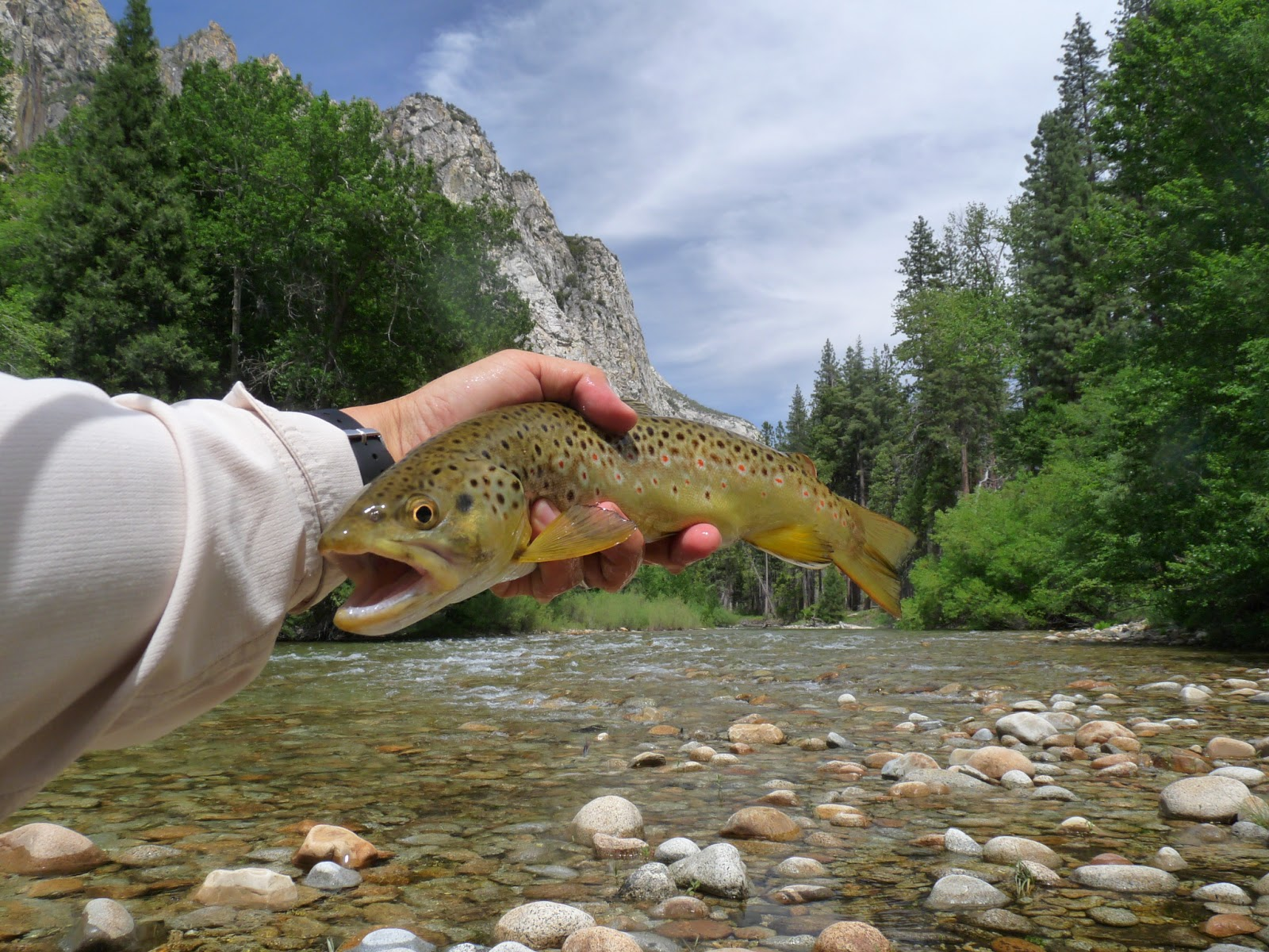 Kings Canyon National Park, Fly fishing | Fly Fishing Blog-TROUTUORT