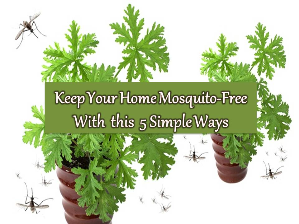 Rainy days are here again, and when there's rain, there is mosquito everywhere and their population is rising. Mosquitos are known to be a carrier of Dengue, Chikungunya, Japanese Encephalitis, Malaria, Filariasis and many others diseases.   But don't you know that you can prevent this with five simple tips in your home?