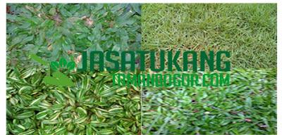 Jual rumput taman di Jakarta timur