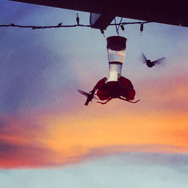 Hummingbirds on feeder at dusk taken with iphone.