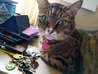 A tabby cat lying beside a set of car keys.