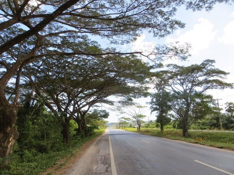 Деревья над ровной дорогой