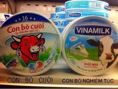 Những hình ảnh hài hước vui, độc đáo nhất, con bò cười nghiêm túc