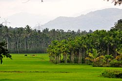 Wayanad Region