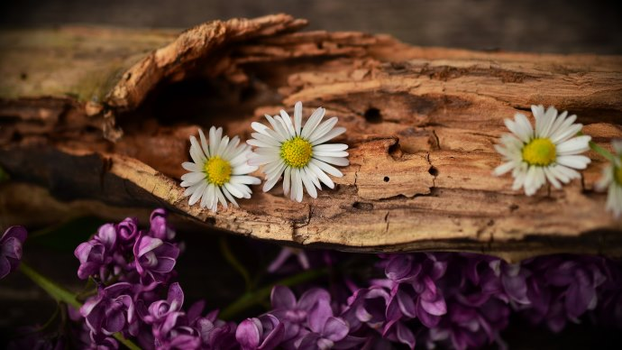 Wallpaper: Old Wood. Lilac and Daisy Flowers