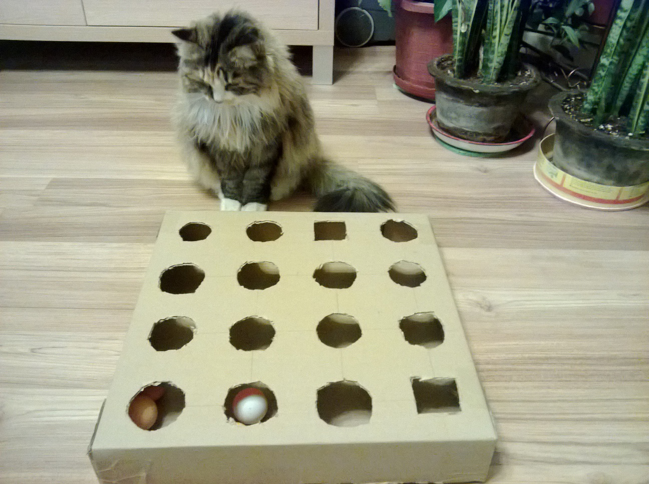 DIY Peek and Play Toy Box for Cat - Best Cat Toy Ever - Meow-Cat.com