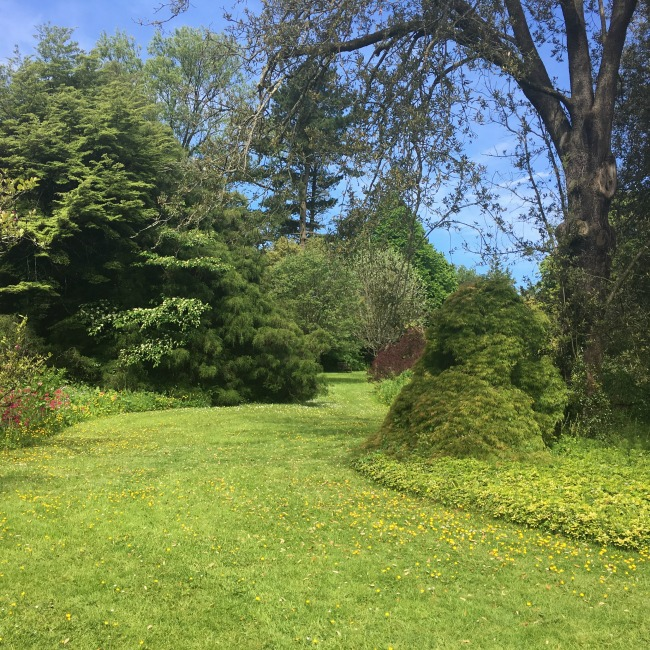 grass-path-winding-through-shrubs-Dyffryn-Gardens