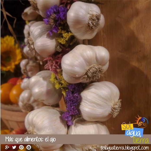 Más que alimentos: el ajo, allium sativum. Propiedades medicinales y preventivas