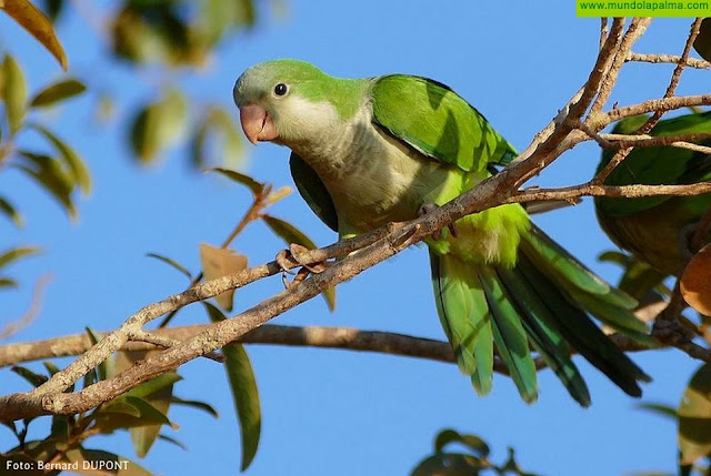 El Gobierno canario remite al Consultivo el proyecto de decreto que crea la Red de Alerta Temprana para la detección de especies invasoras
