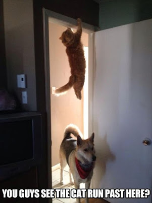 funny dog picture, funny cat picture, dog vs cat, cat hanging from doorframe