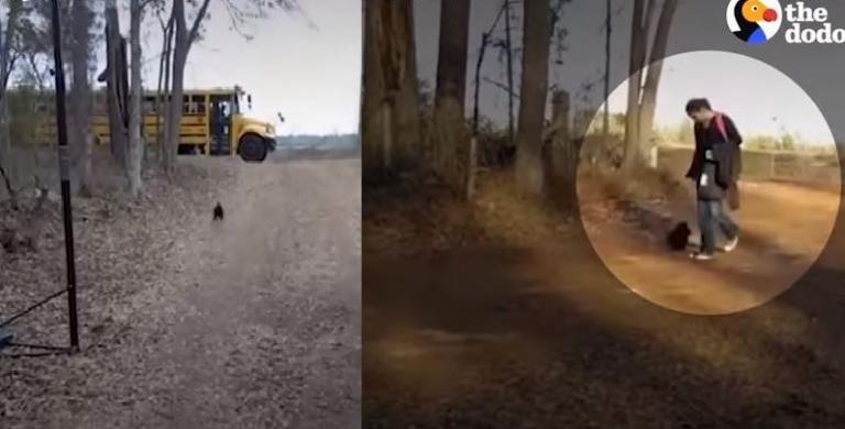 Κόκκορας περιμένει κάθε μέρα το αφεντικό του στη στάση που κατεβαίνει (βίντεο)