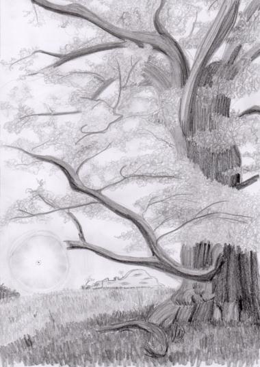Die Geschichte von der Spore und dem Eichbaum