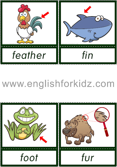Animal body parts flashcards for ESL students