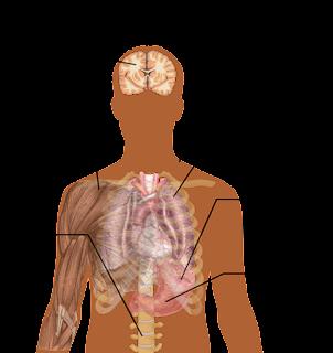 Penyebab, Gejala dan Obat Penyakit Malaria