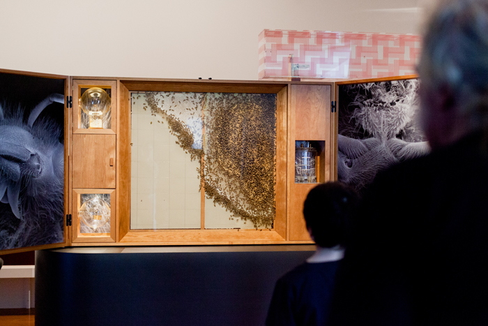 live bee display