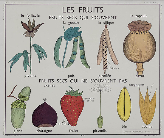 Fruit and seed pod illustration, The Art of Instruction