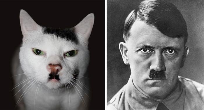 Um gato que parece Hitler