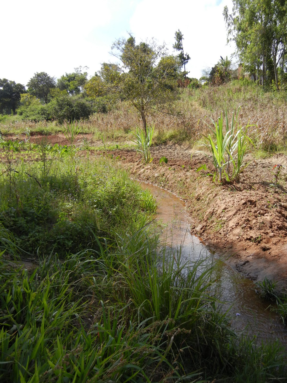 Leo In Malawi On The Way To Dam Galiva Near Mzuzu