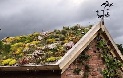 Casa con techo ecológico - Arquitectura