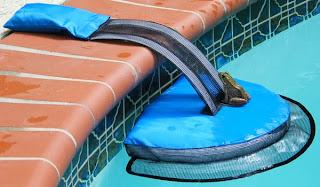 perereca na piscina
