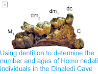 https://sciencythoughts.blogspot.com/2018/08/using-dentition-to-determine-number-and.html