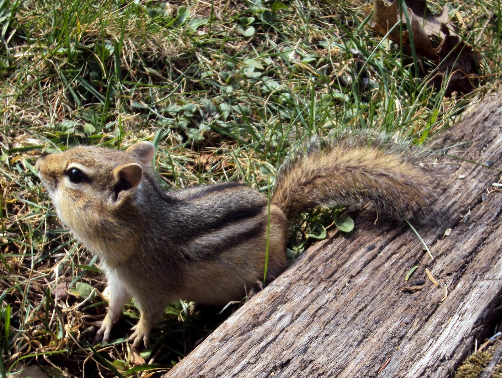 ANIMALS PLANET: Cute Animals