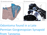 http://sciencythoughts.blogspot.co.uk/2017/02/odontoma-found-in-late-permian.html
