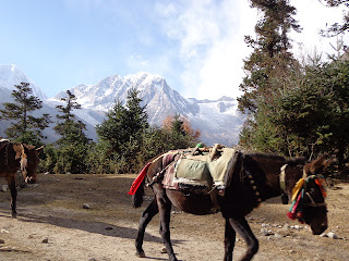 Food are carrying by Donkey at the Manaslu trekking areas