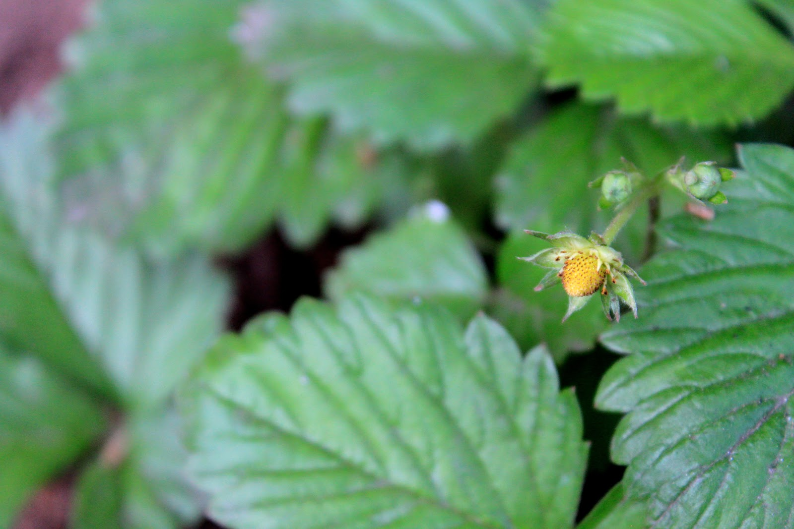 Botany Seeds Flowers Pollination Amp Fruits