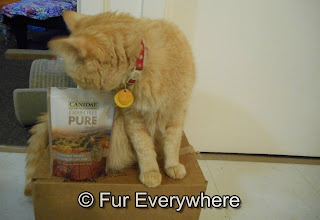 An orange tabby checking out a bag of cat treats.
