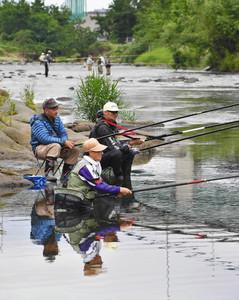 鮎釣り漁解禁