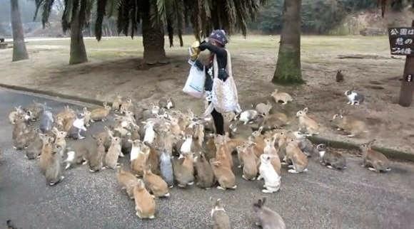 Pulau Okunoshima Surganya Kelinci Di Jepang