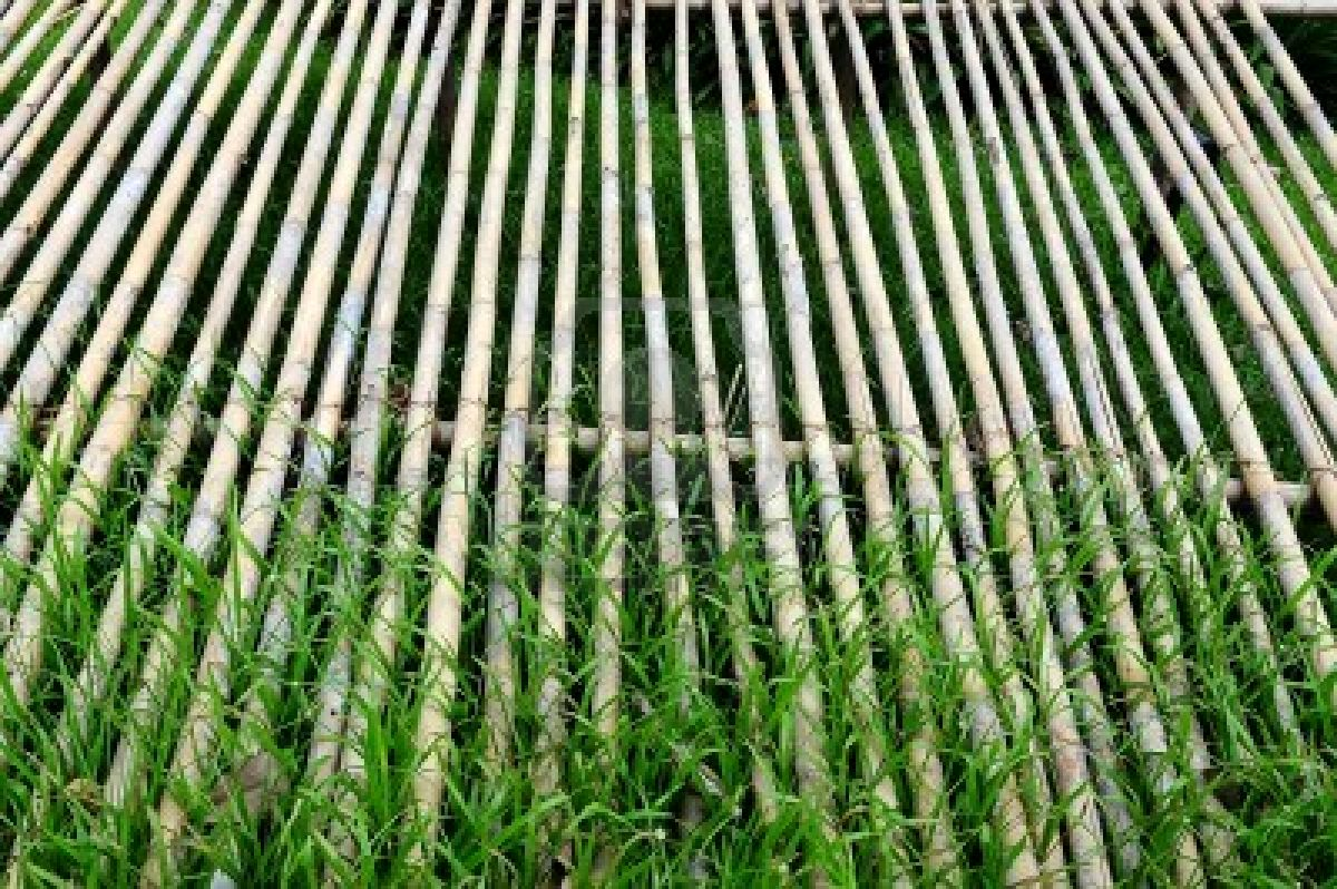 Art Wall Decor: Dried Bamboo Sticks Photo