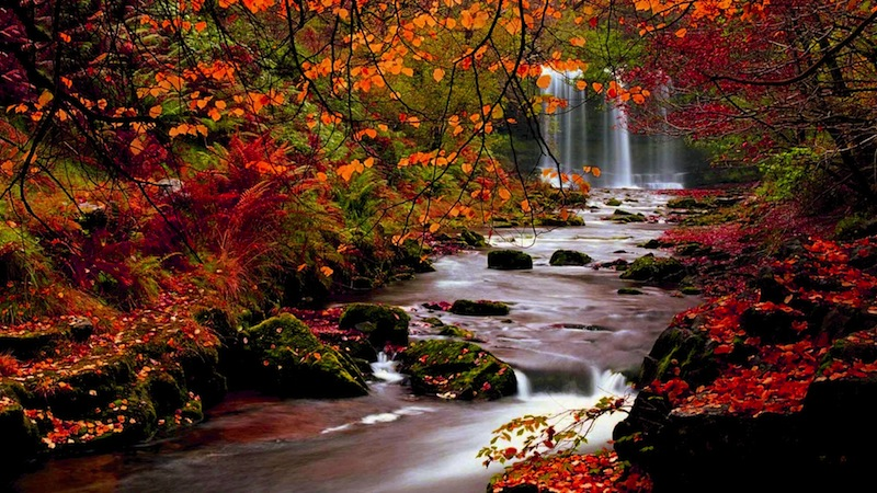 Beautiful Fall Paintings Wallpapers Thanksgiving Wallpapers