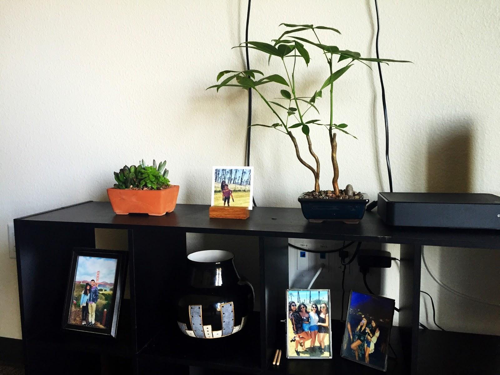succulent and plant decor