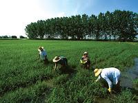 Manfaat Peta Dalam Kajian Aspek-Aspek Pertanian
