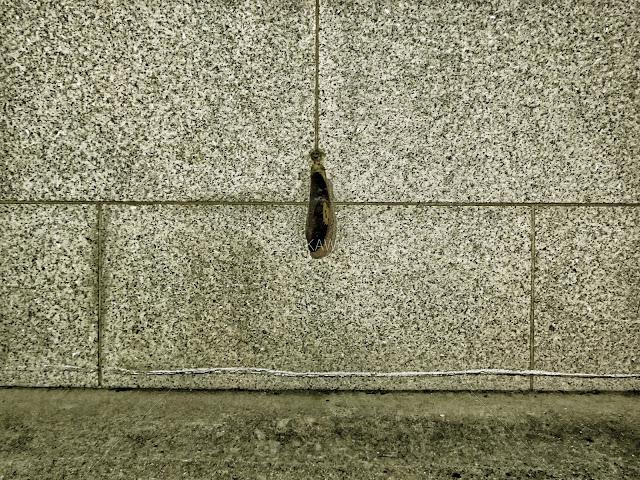 神戸旧居留地の元英国チャータード銀行ビルの壁に本物の茄子