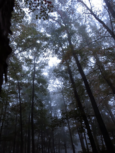 Fog in the treetops