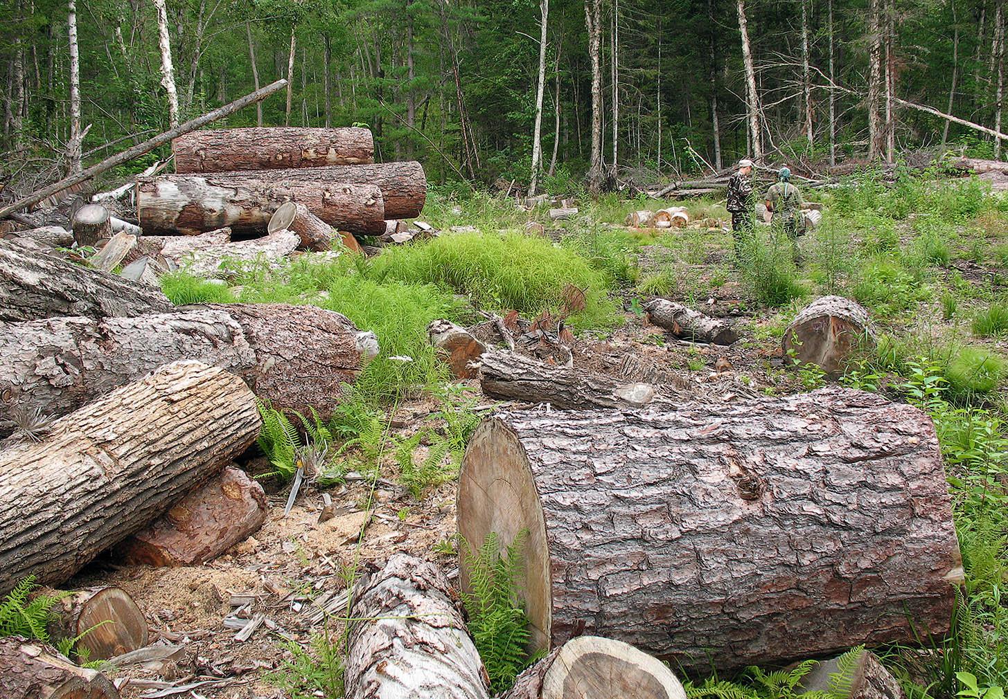 Penebangan Hutan Secara Liar Dan Tidak Bertanggung Jawab Dapat Mengakibatkan Sahabat Belajar Sd