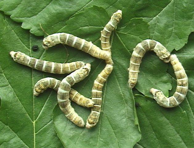 los gusanos son animales invertebrados