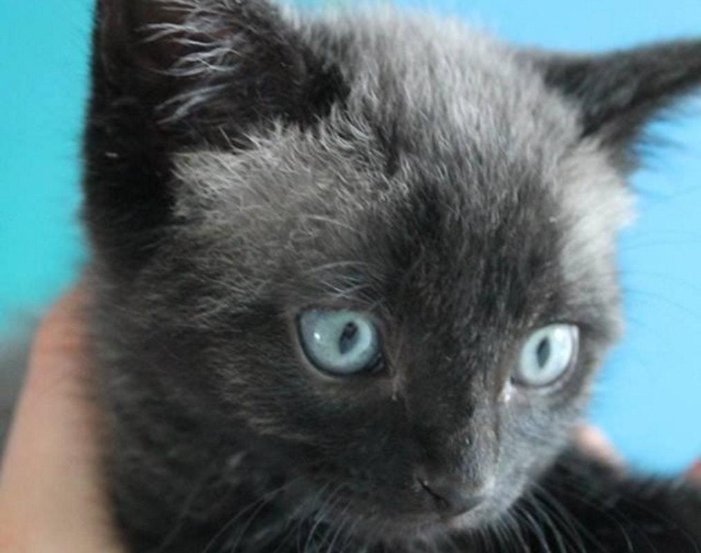 cute sick kitten be a catman now