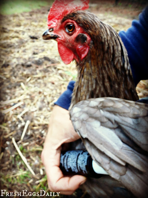 Natural Respiratory Cure Chicken