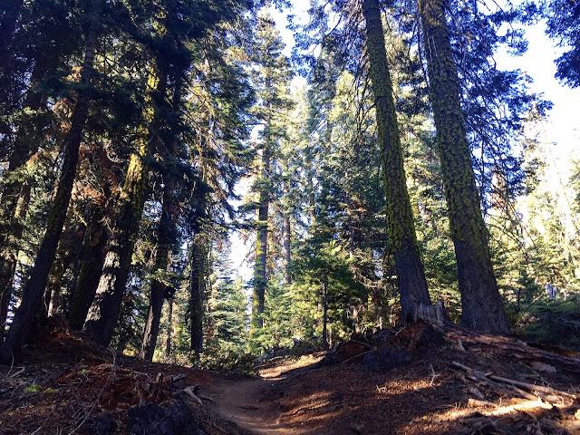 Dewey Point to McGurk Meadow trail head