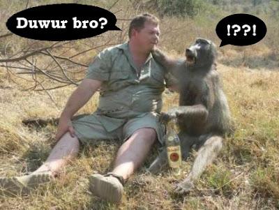 manusia dan hewan monyet sedang mabuk lucu