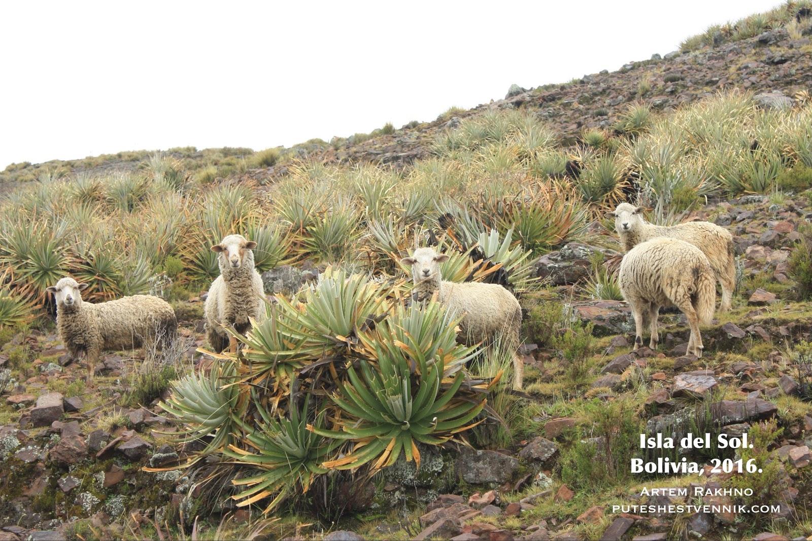 Овцы на склоне горы
