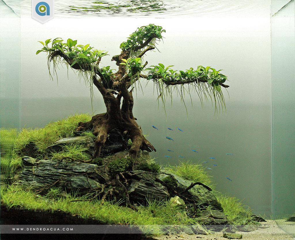 Hồ thủy sinh bố cục đơn giản buộc ráy nana