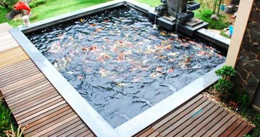 Skema Filter Kolam Ikan Koi Penyuluh Perikanan