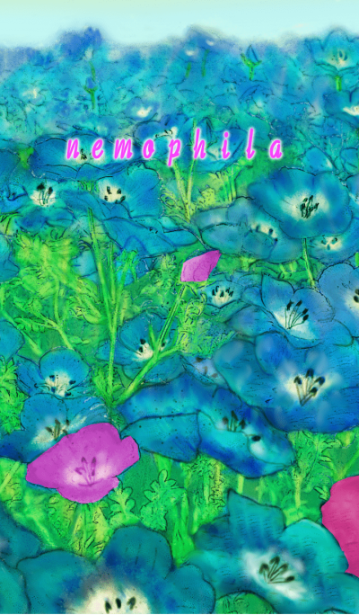 nemophila