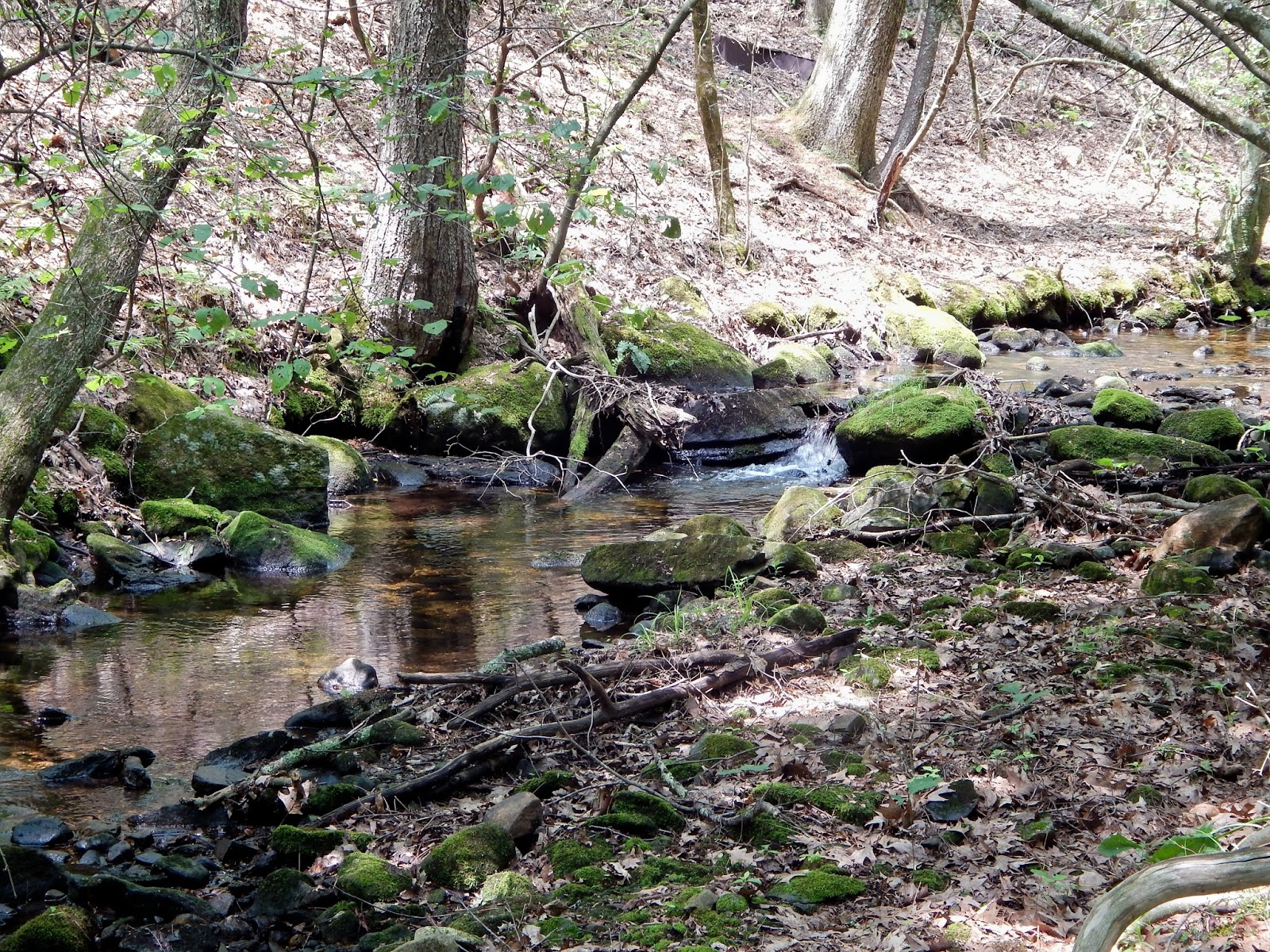The Hills Stream